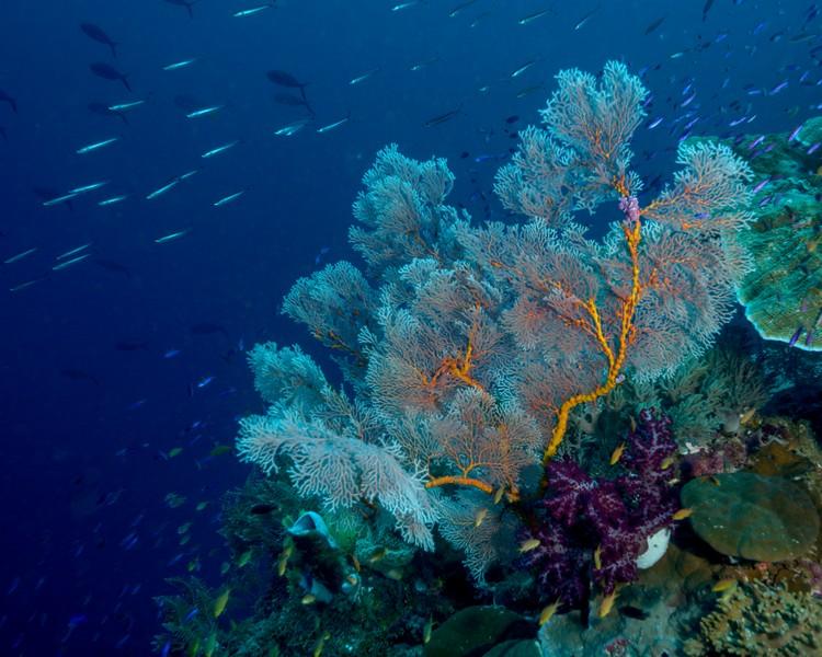fan-coral-weda-resort-1