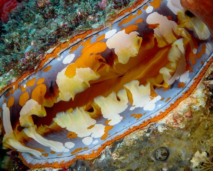 giant-clam-weda-resort