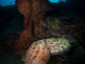 cuttlefish-weda-resort-halmahera-indonesia