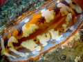 giant-clam-weda-resort