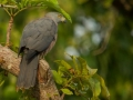 Bird Watching in Halmahera at Weda Resort